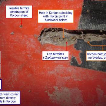 Kordon-install-fail-live-termites