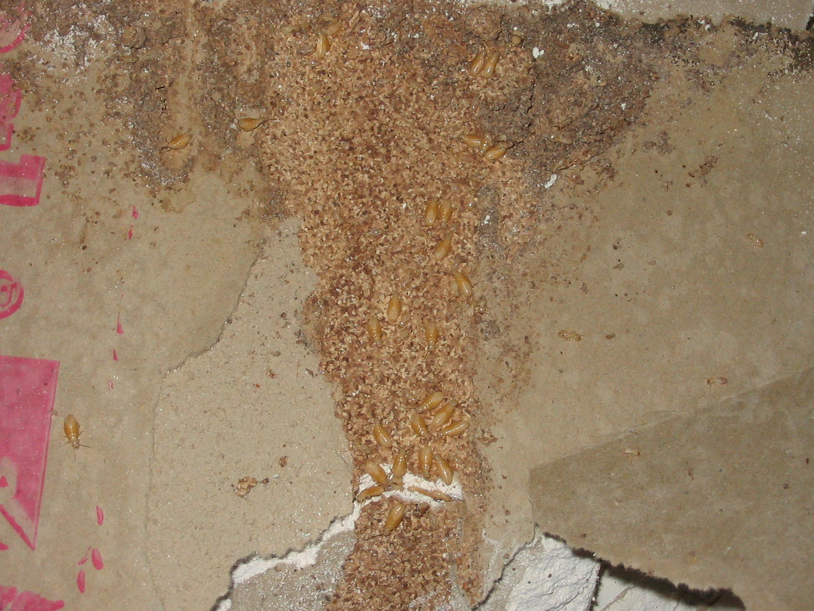 Termite Images Environpest Gallery