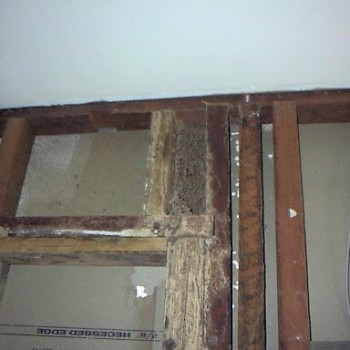 Termite-damage-Wall-studs