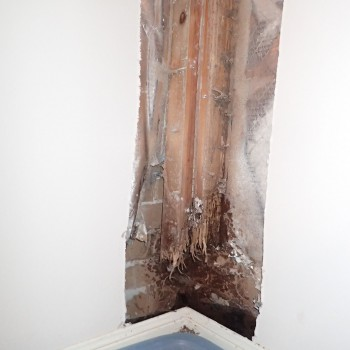 Termite-damage-in-wall