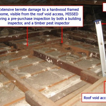 Termite-damage-missed-pre-purchase