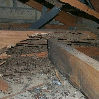 Termite-damage-roof