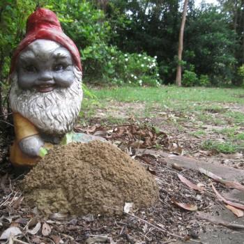 Termite-nest-Leprechaun