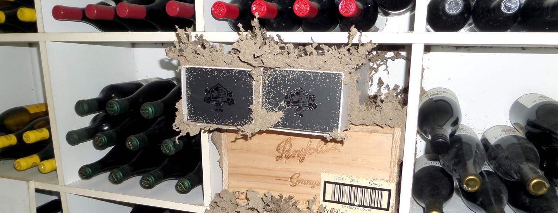 Termites In Wine Cellar